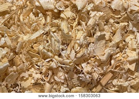 Background of randomly placed wooden shavings. Large swirling sawdust softwood. Texture or backdrop for industry or ecology design projects.