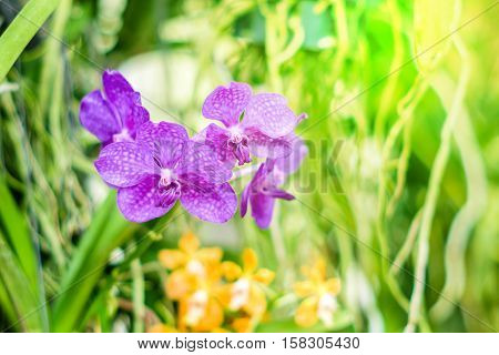 Beautiful purple orchid flowers on a green branch