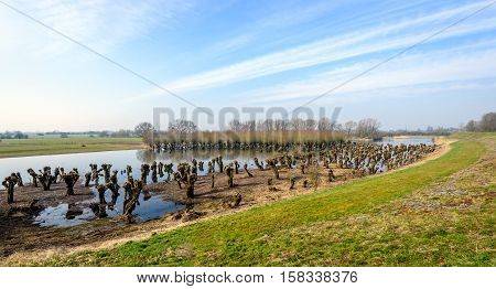 Colorful landscape with pruned old and irregularly shaped willow trees reflected in the mirror-smooth surface of a flooded nature reserve next to an embankment in the Netherlands.