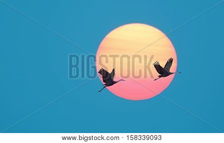 Long-necked tropical birds against sun and blue sky background