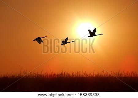Beautiful tropical bird against sunrise autumn concept