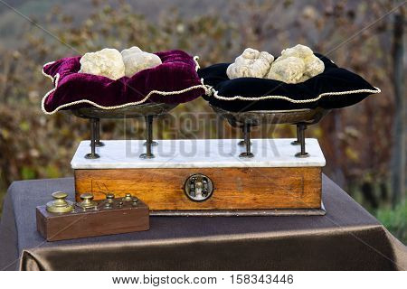 Some White Truffles On The Vintage Scales With Red Pillows