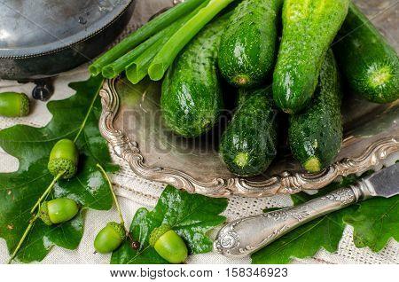 Cucumbers. Vintage Style.