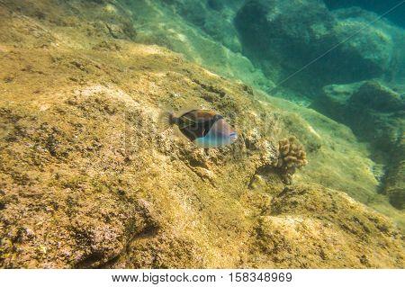 Sea bed of Sharks Cove, North Shore of Oahu in Hawaii. Underwater marine life in Pacific Ocean.