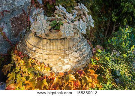 Autumn Leaves, Girlish Grapes, Greece