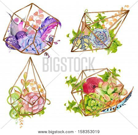 Cactus and succulent set with geometrical terrarium; doodle colorful flowers in pots and jars; hand drawn green cacti watercolor illustration