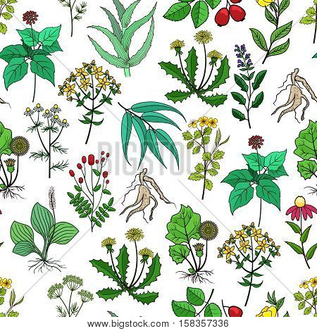 Drug plants and medicinal herbs vector background on white. Pattern with green herbs for medicine. Herb and flower for drug illustration