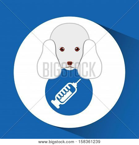 digital pet shop with poodle and pharmarcy drugs vector illustration eps 10