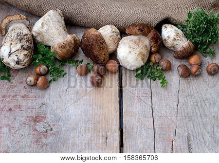 Mushrooms ceps nuts and herbs on wooden background