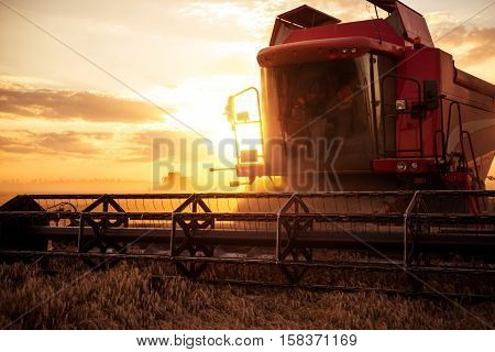 Harvesting The Wheat