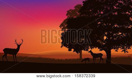 deer family grazing at sunset under trees - rural evening landscape