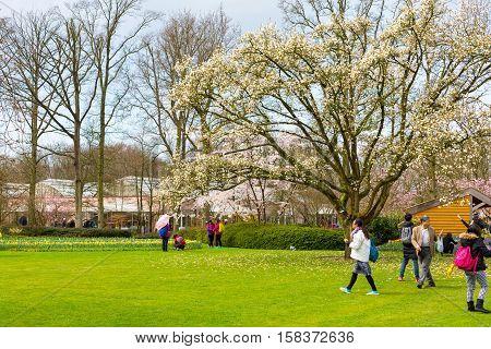 Lisse, Netherlands - April 4, 2016: People walking and making photos in dutch spring garden Keukenhof, Lisse, Netherlands