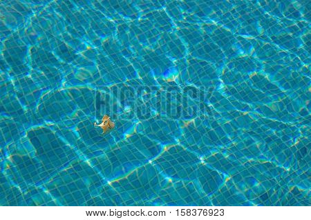 Yellow flower floating in blue water with glistening sun reflections