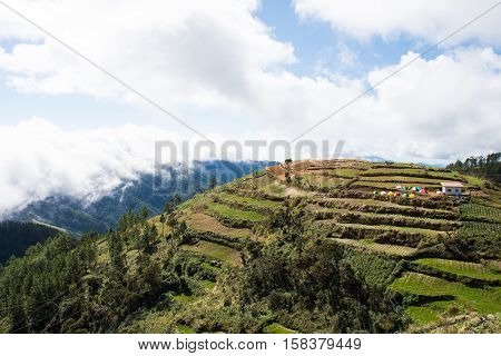 terraces of farms around Mount Pulag, Philippines