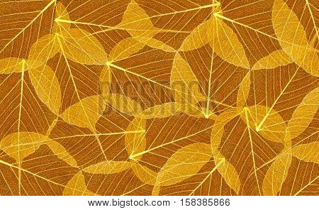 Decorative skeleton leaves texture as nature background