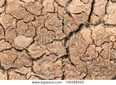 Cracked earth in sumer season, dry nature