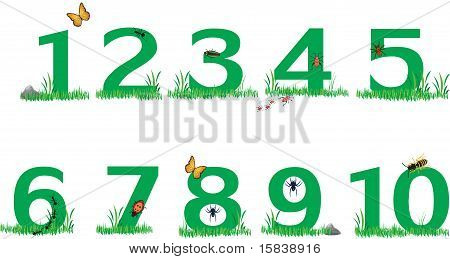 Nature Green Grass Numbers