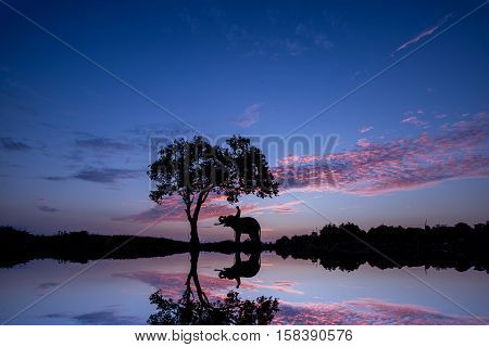 Silhouette Sunset Sunrise Action Of Thai Elephant In Surin Province, Thailand