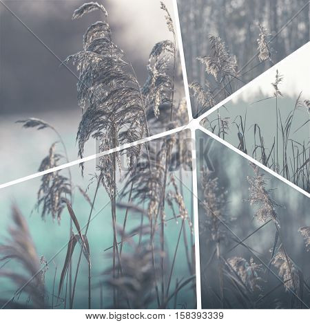 Collage of winter images - travel background (my photos)