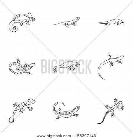Iguana icons set. Outline illustration of 9 iguana vector icons for web