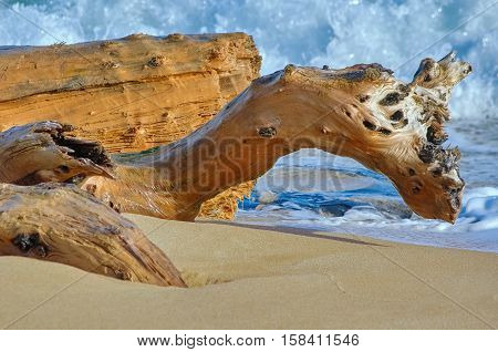 Trunk of an Old Tree on the Sea Shore