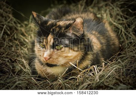 Cat In The Hay