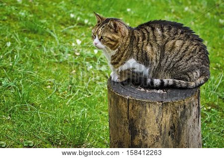 Cat On A Tree Stump