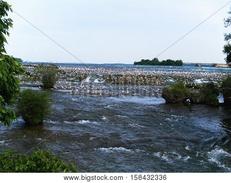 Living dangerously - Seagulls at Niagara Falls. summer trip to Niagara Falls.