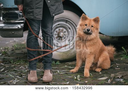 Cute dog with woman. Leash over her legs.