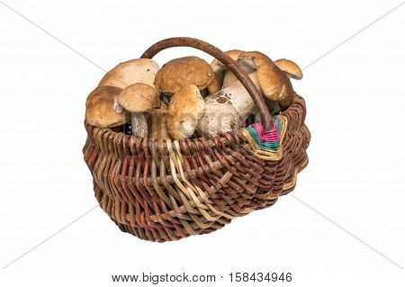 Porcini mushrooms in a basket. Isolated cep