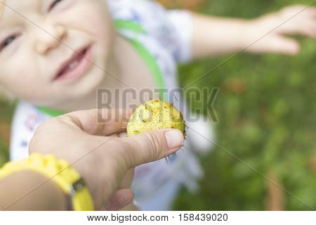 A child touches a prickly chestnut and grimaces