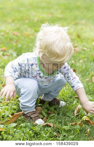 Baby learns to walk and collecting fallen chestnuts