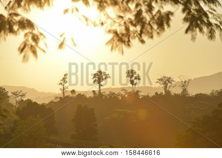 Trees and leaves silhouette on open field at sunset vibrant orange with lense flare