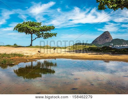 The green tree reflected in a puddle and Guanabara Bay on the background of Sugarloaf Mountain and blue sky with white clouds, Rio De Janeiro, Brazil
