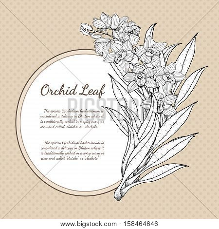 Cymbidium Orchids card vector on brown background.Cymbidium Orchids card by hand drawing.