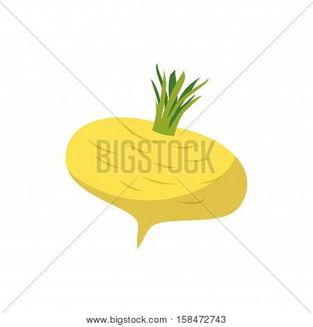 Turnip Isolated. Yellow Vegetables On White Background. Vegetarian Food