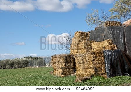 Bales of hay in a rural landscape in Ciudad Real Province Spain