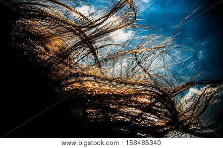 Hair in the wind. The wind is blowing away the hair. Abstract,close up