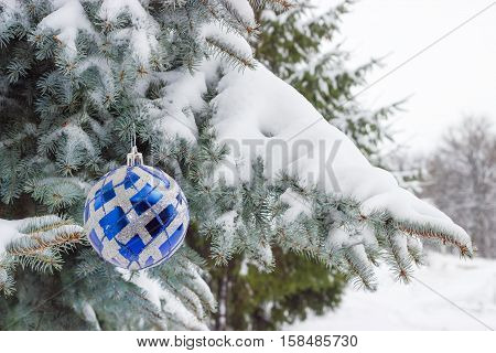 Branches of a blue spruce covered with snow with Christmas ornament in the form of a blue glass ball