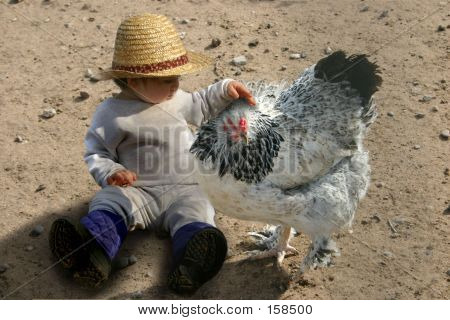 a child petting a chicken poster