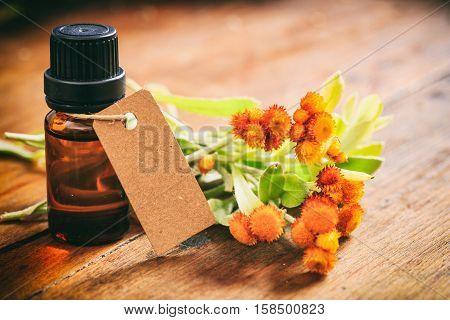 Fresh Helichrysum Twig On Wooden Background
