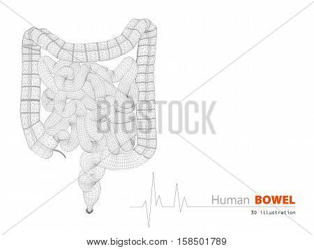 3D Illustration Of Bowels Abstract Scientific Background