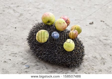Hedgehog On A Concrete Surface. Hedgehog Needles Pinned On Apples, Peaches And Plums. Hedgehog Curle