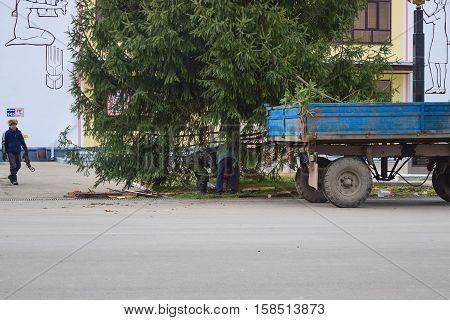 Dismantling The Christmas Tree