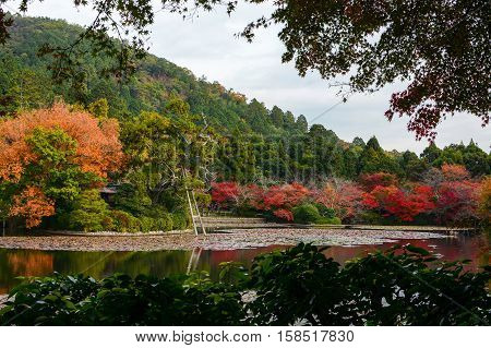 Scenic lily pond surrounded by red maple trees in full fall color in Kyoto, Japan