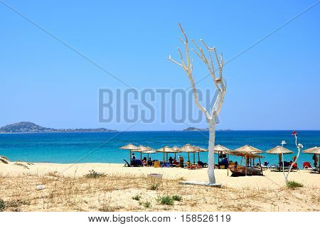 Naxos landscape near sea beach with umbrellas and white tree