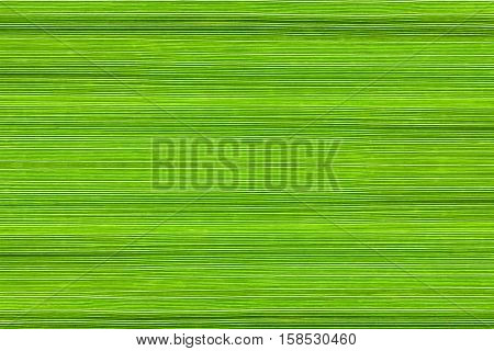 Background of green manna grass (Glyceria) leaves