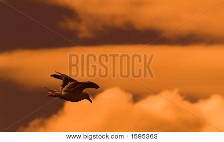 Flying Seagull At Dawn