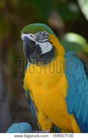 A blue and gold macaw with a curved beak.