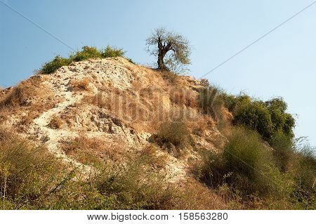 Tree on a hill in desert, Rajasthan, India
